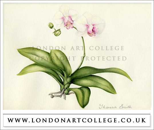 Botany online classes helper
