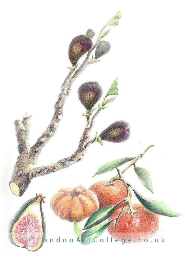 Botanical Coloured Pencils Course
