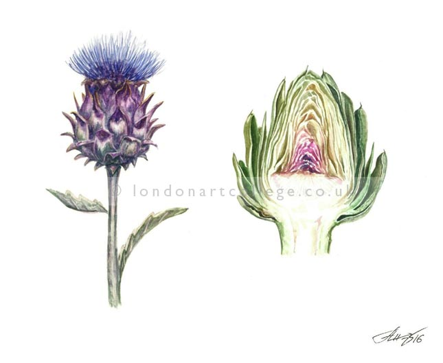 Botanical Painting Online Art Course