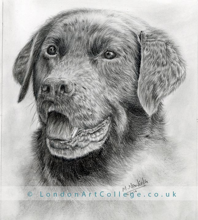 Pet Portrait Online Art Course