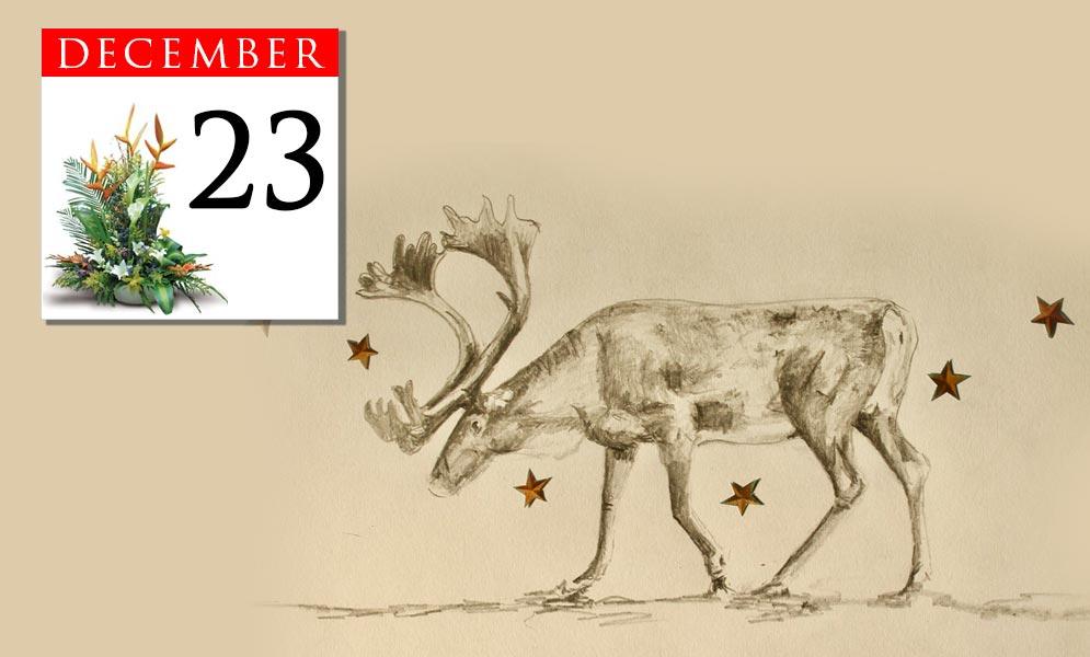 Advent Calendar December 23rd
