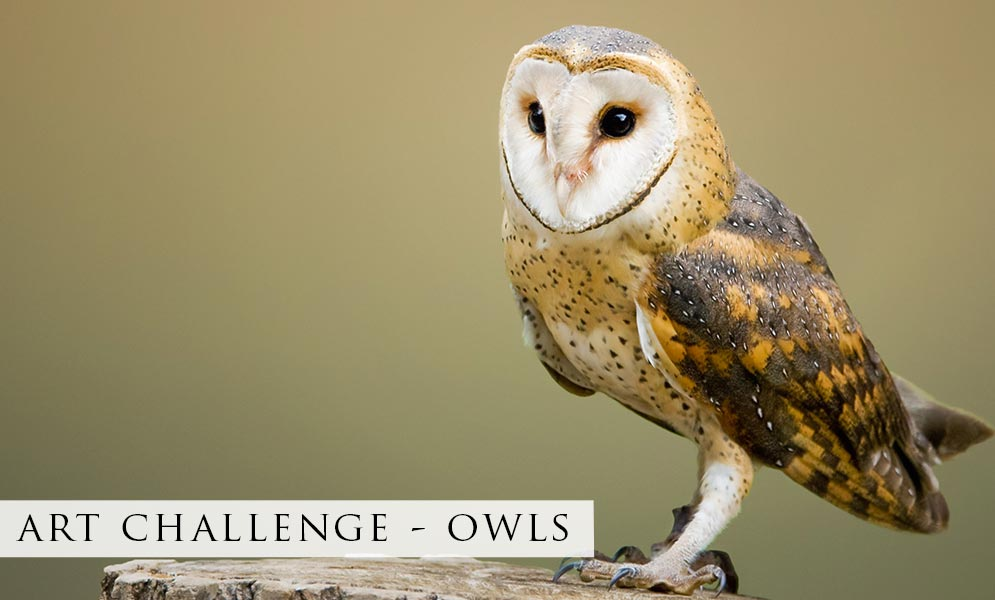 Weekend Art Challenge – Owls