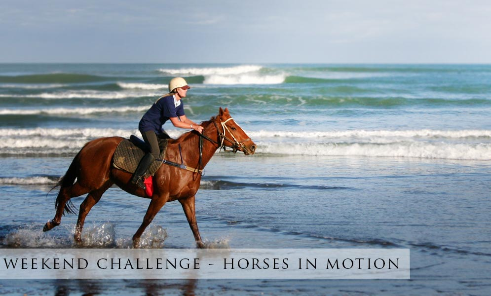 Weekend Art Challenge – Horse in Motion