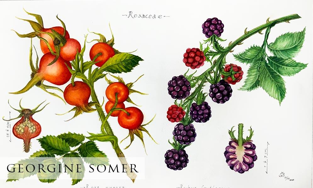 Georgine Somer