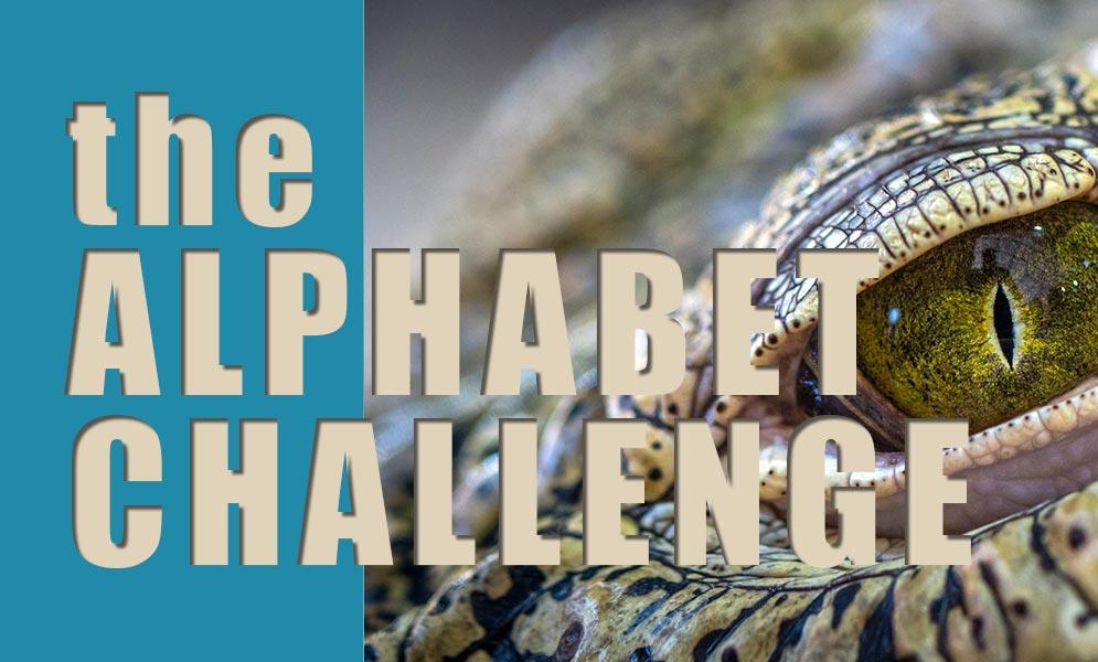 Weekend Challenge – Alphabet Challenge C