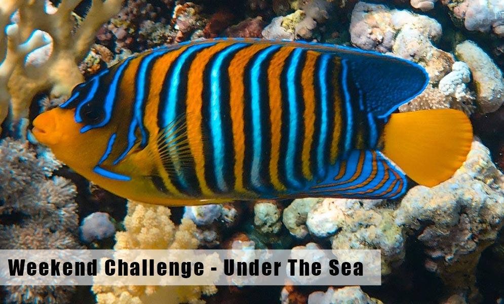 Weekend Challenge – Under the Sea
