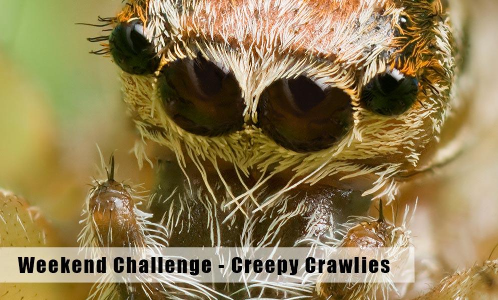 Weekend Challenge – Creepy Crawlies