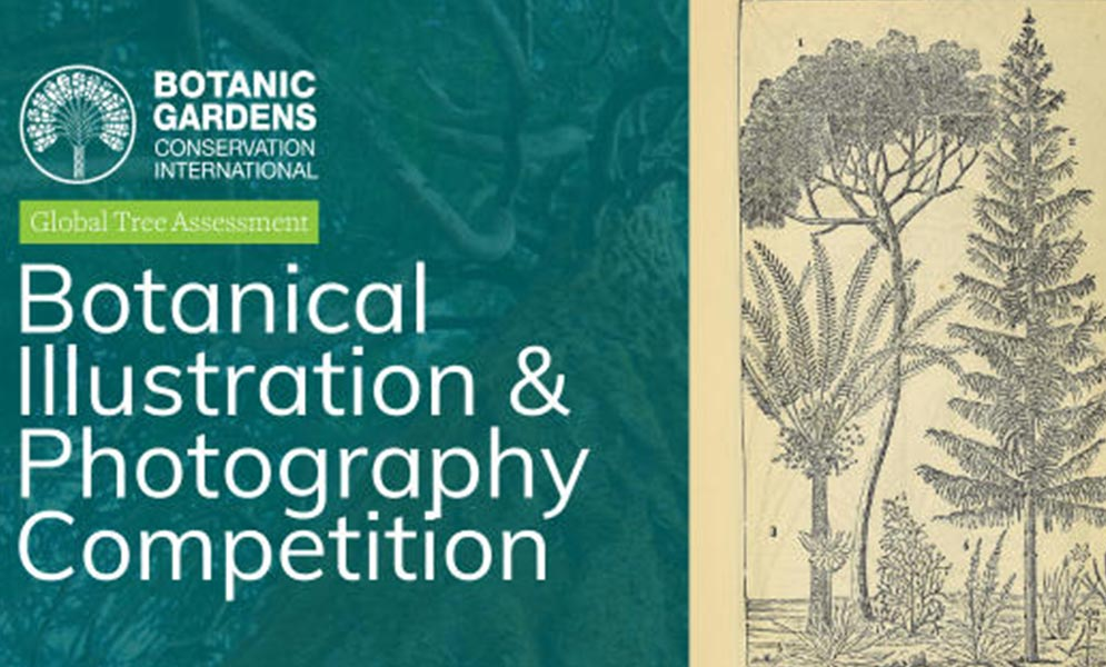 Botanical Art & Photography Competition: Threatened Trees